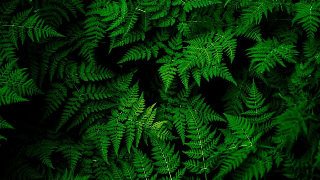 Green Wallpaper Images
