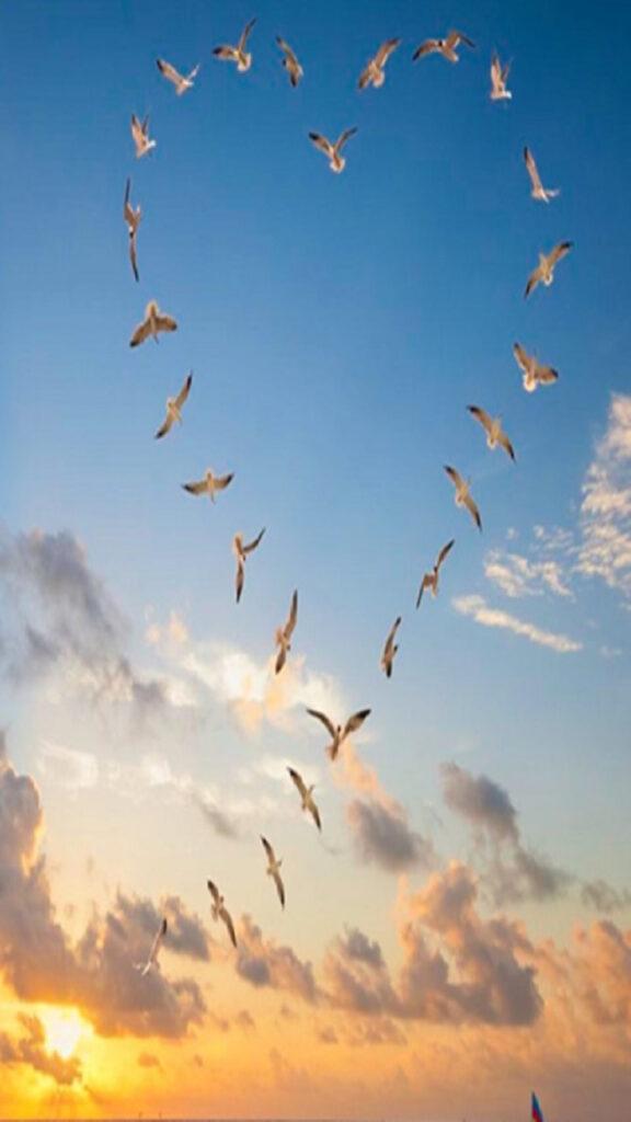birds 2021 photo