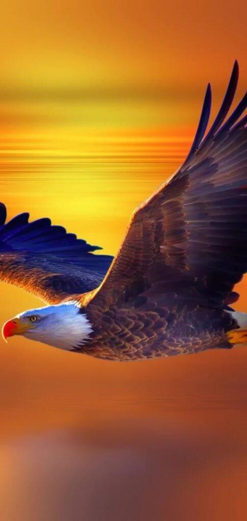 Birds Backgrounds