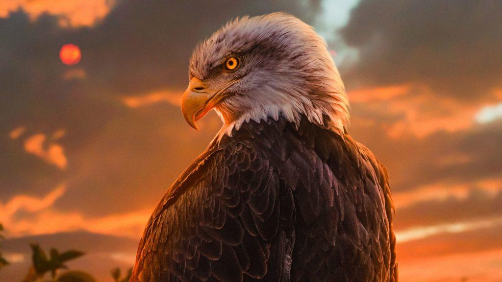 Birds Desktop Wallpaper