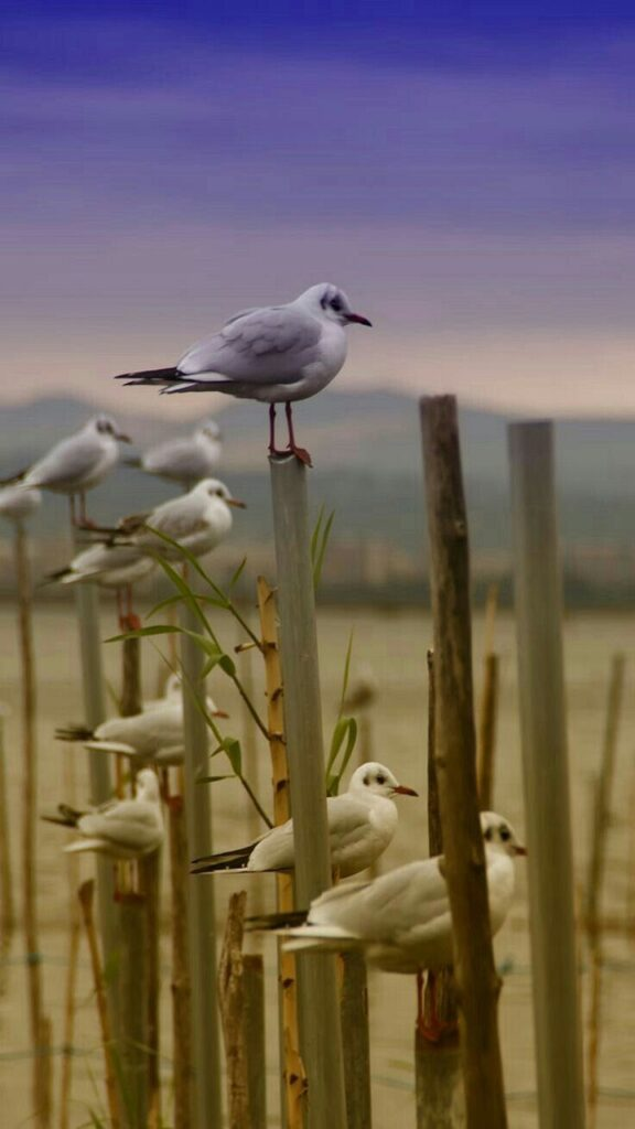 birds hd image