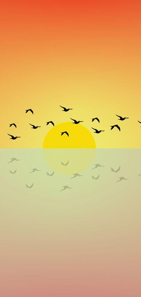 Birds Photos Download