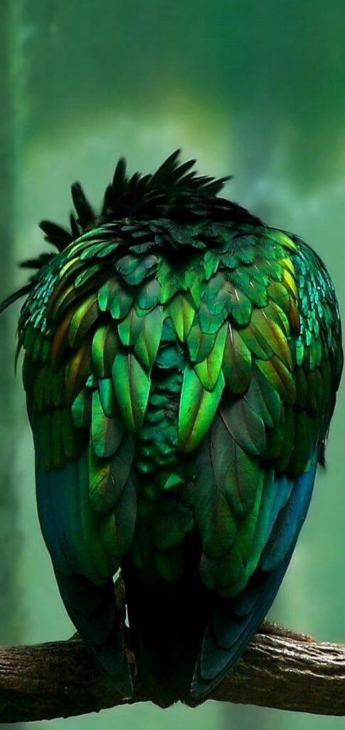 Birds Wallpaper For Hd