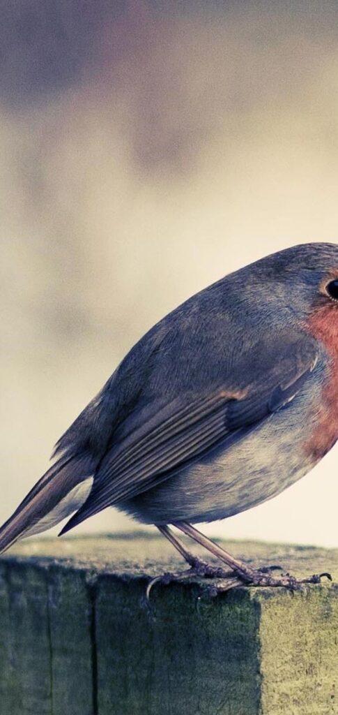 Birds Wallpaper For Ipad (3)