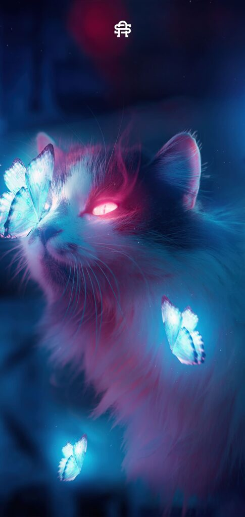 Cat Background 4k