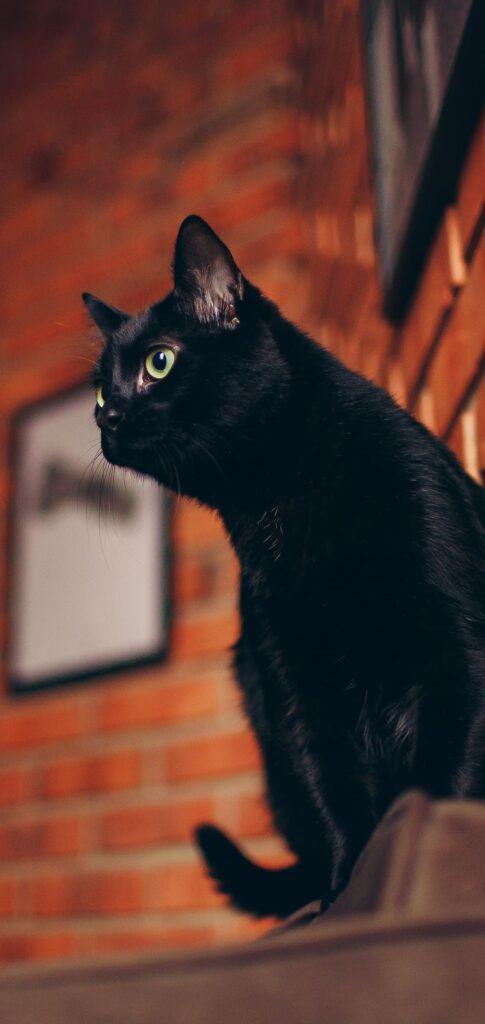 Cat Background Download
