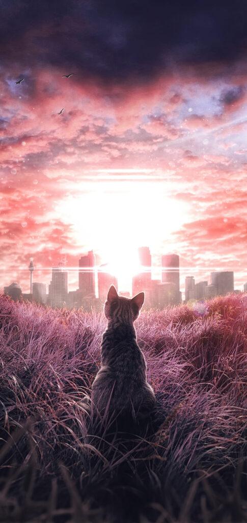Cat Background Full Hd