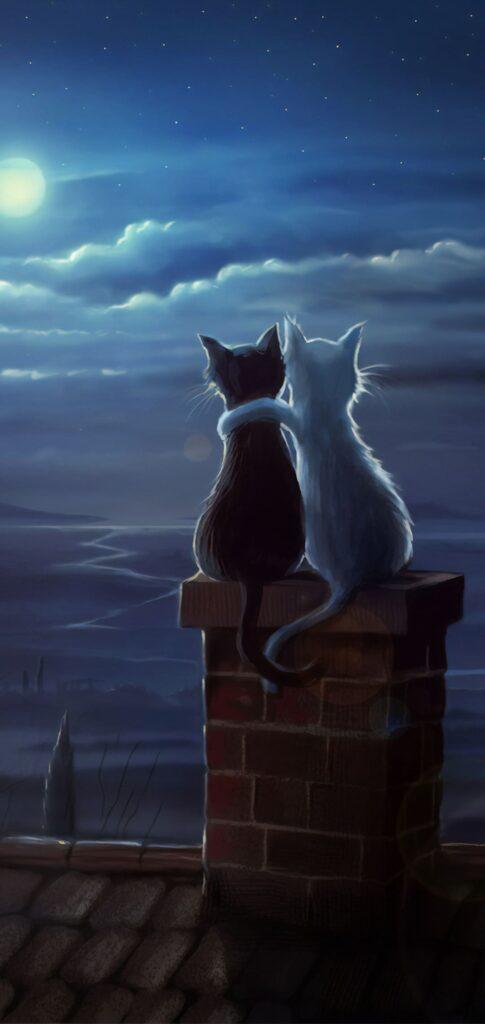 Cat Background Hd