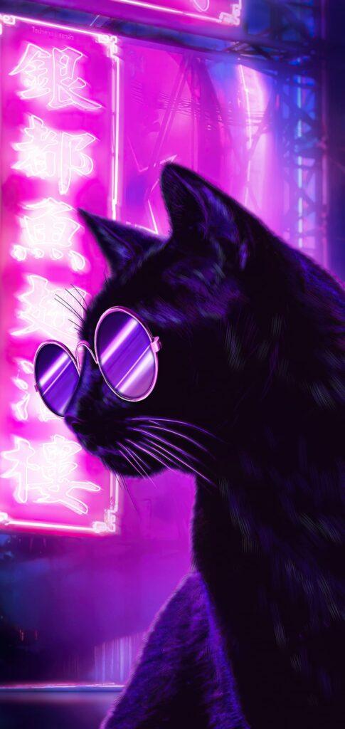 Cat Images