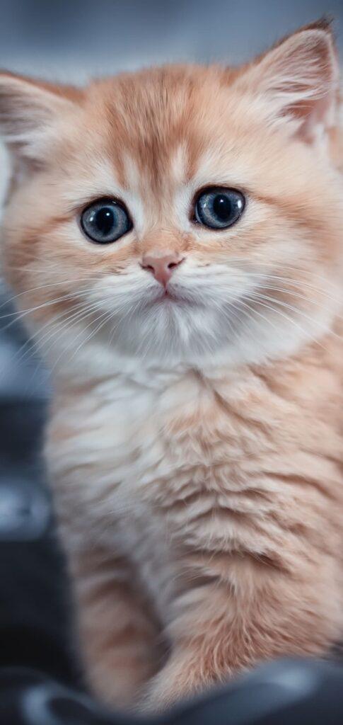 Cat Images 4k