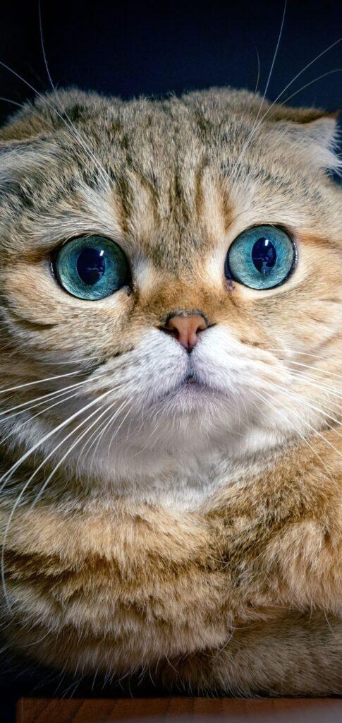 Cat Images Download