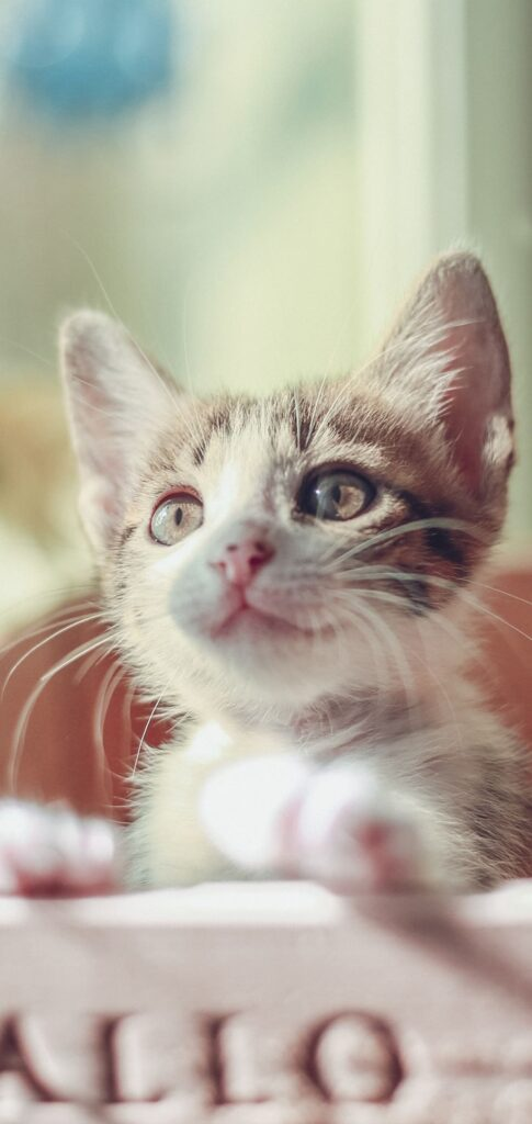 Cat Images Hd