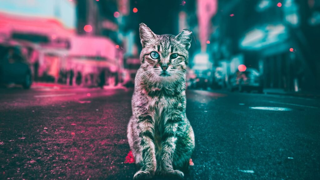 Cat Pc Background