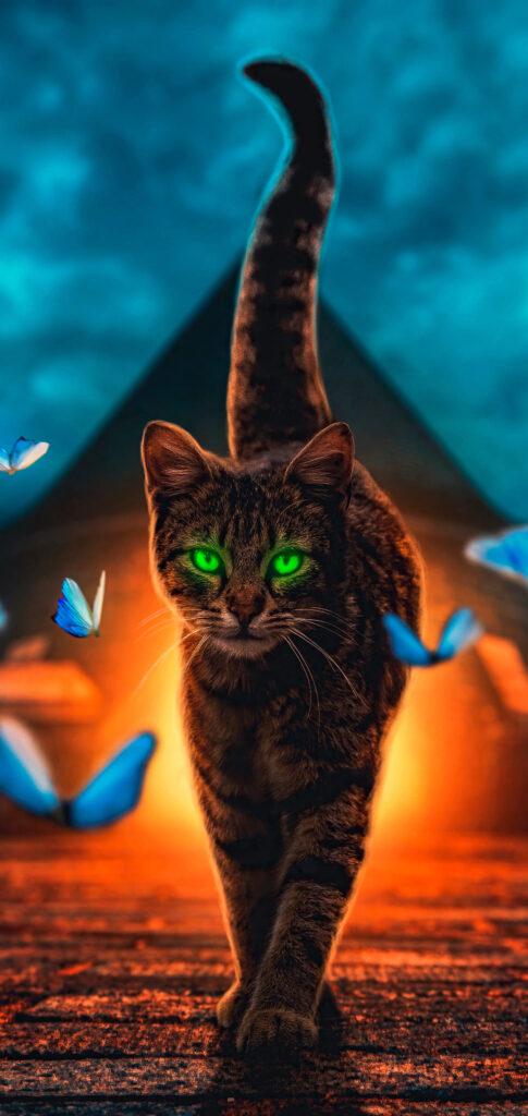 Cat Photo Full Hd