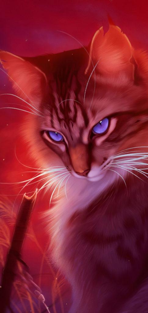 Cat Wallpaper Hd
