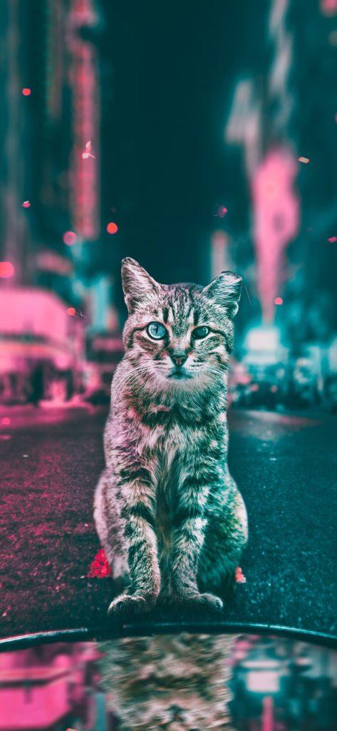Cat Wallpapers 4k