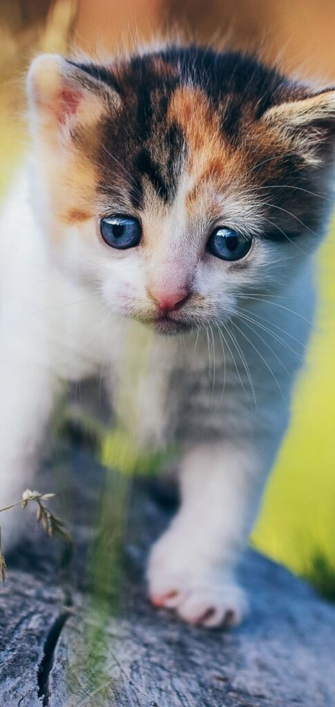 Cat Pictures Hd
