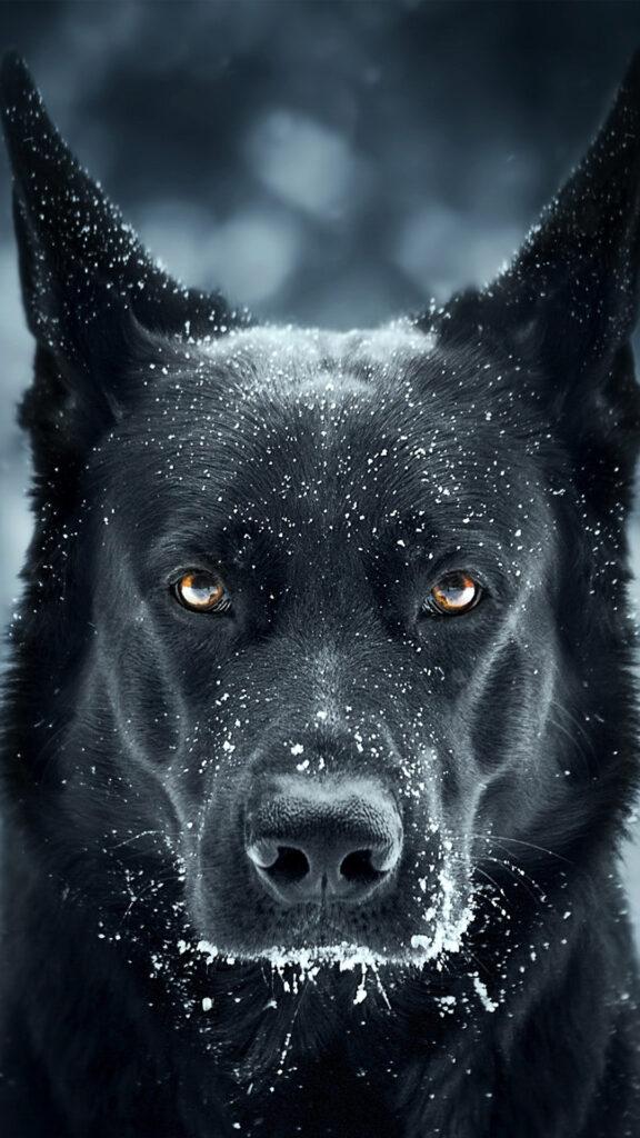 dog 4k background