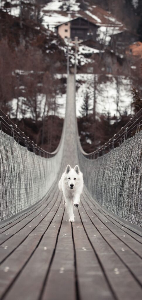 Dog Background Download