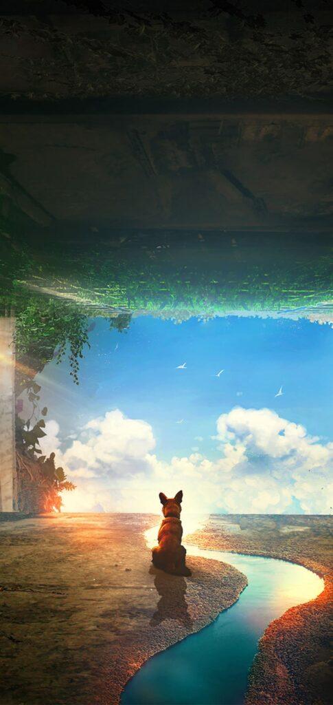 Dog Background Hd