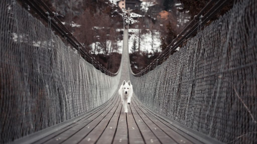 Dog Computer Wallpapers