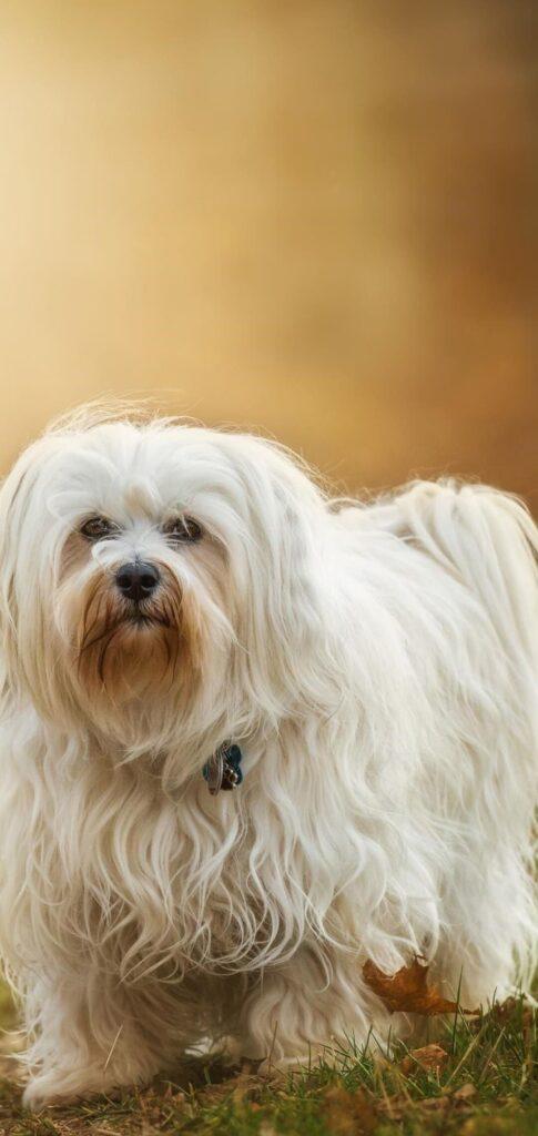 Dog Images Download