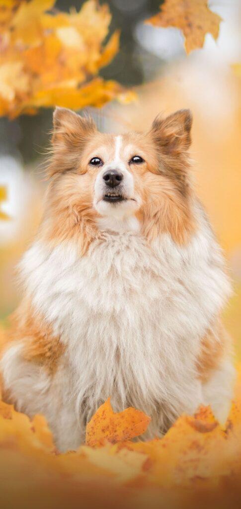 Dog Images Hd