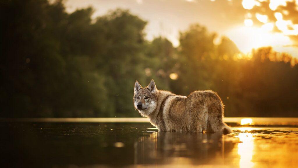 Dog Pc Background