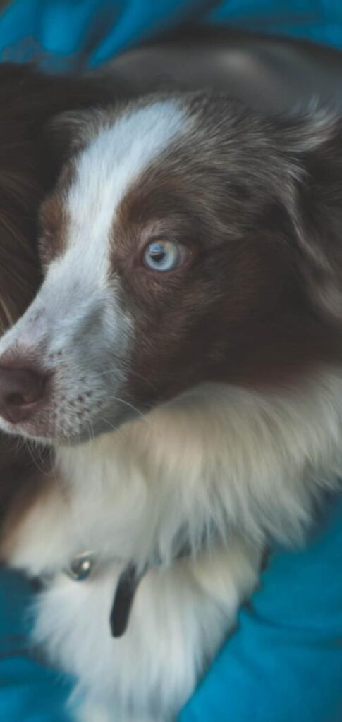 Dog Photo Full Hd