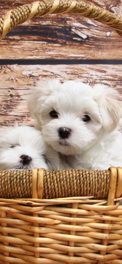 Dog Wallpapers 2020