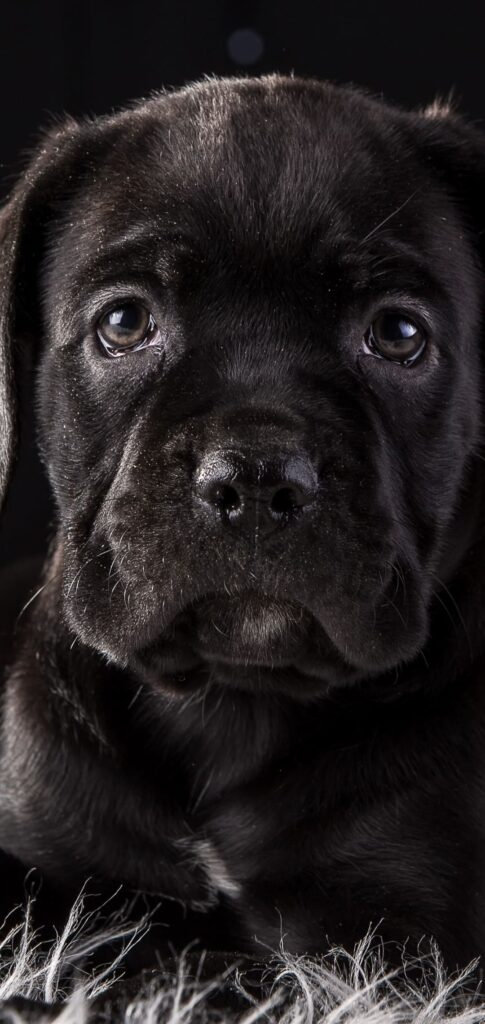 Dog Pictures Download