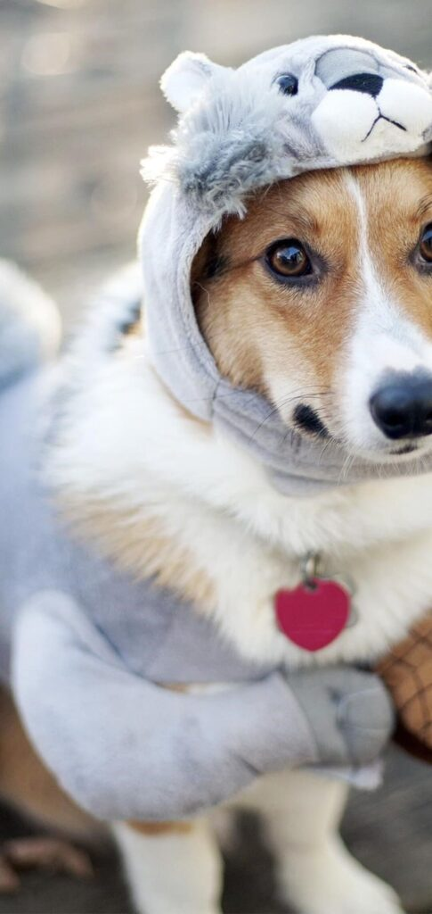 Dog Pictures Hd