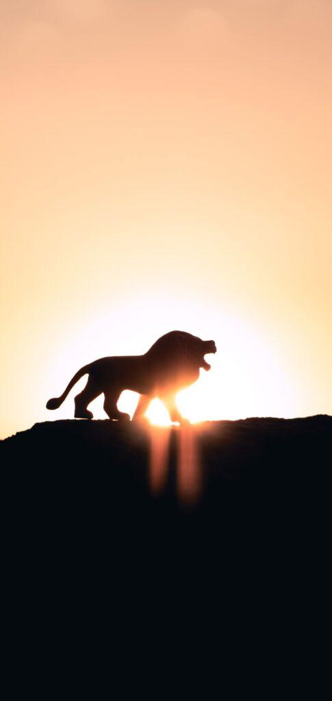 Lion Background 2020