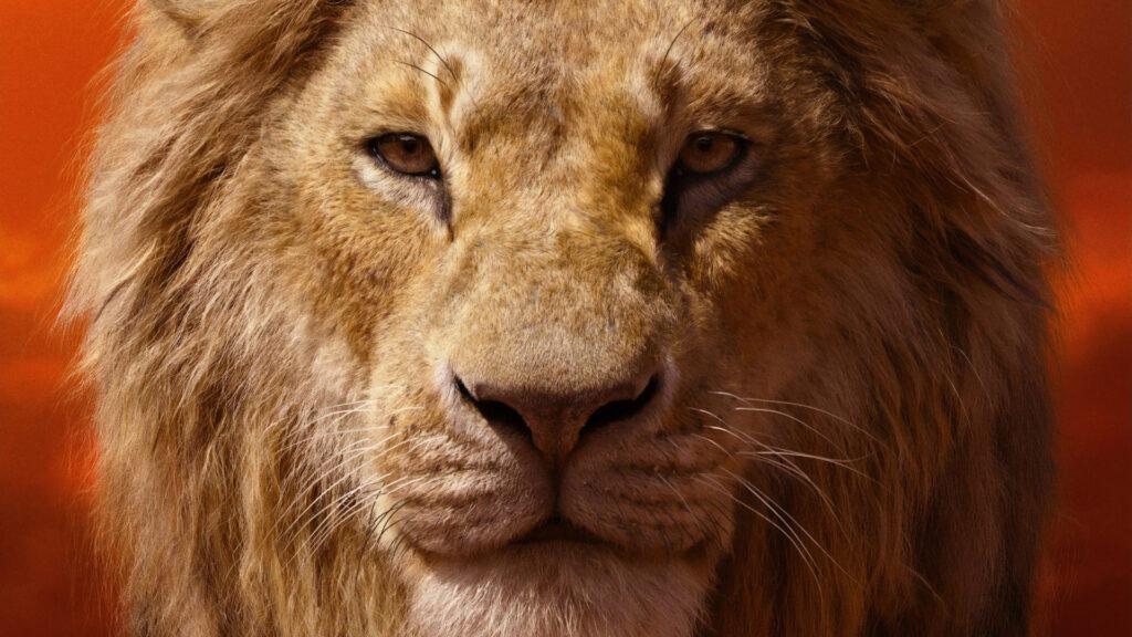 Lion Laptop Background Full Hd