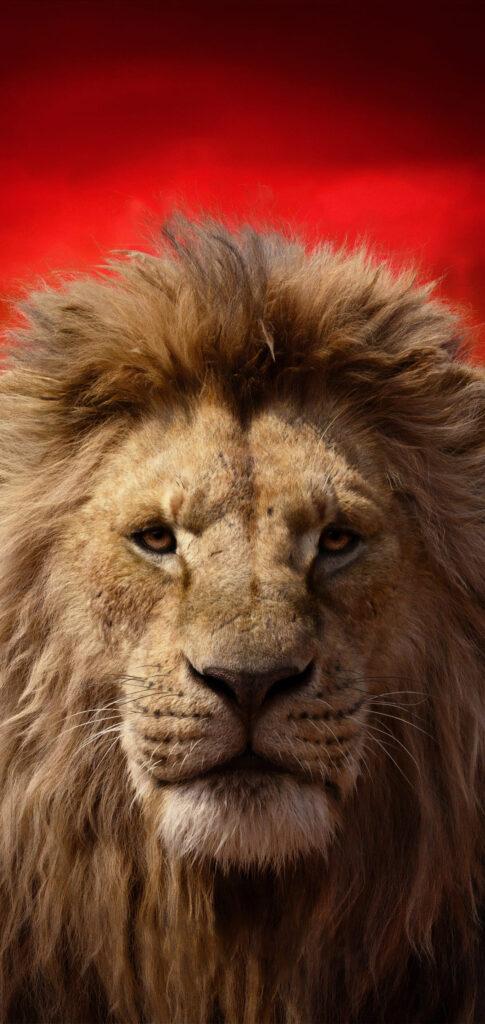 Lion Photo 4k