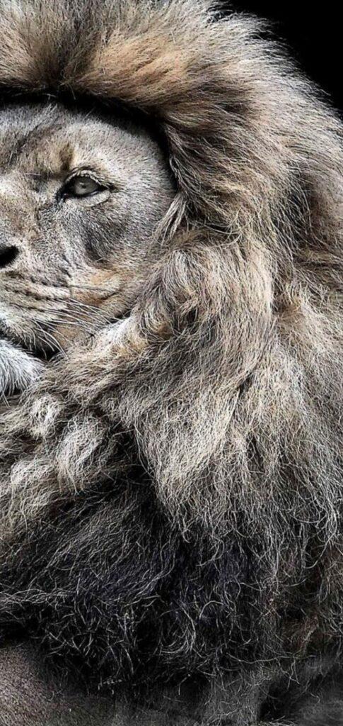 Lion Photos