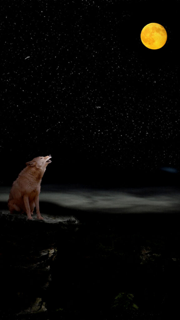 wolf photo 4k