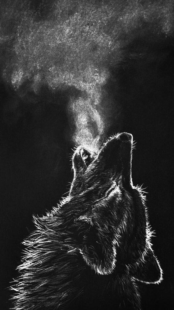wolf photo hd