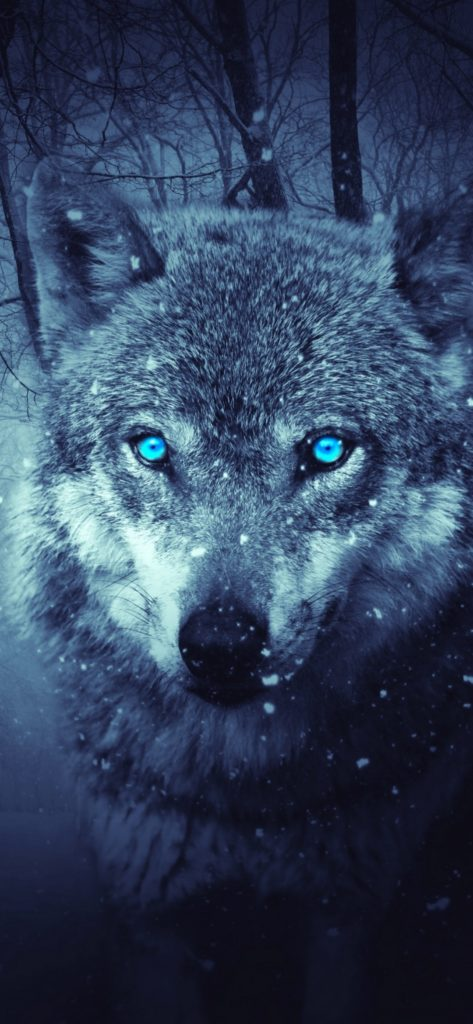 Wolf Wallpapers 2020