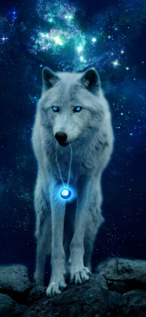 Wolf Wallpapers 4k