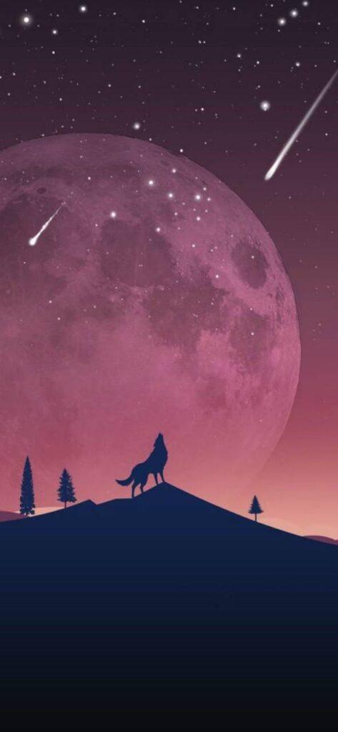 Wolf Iphone Xr Wallpaper