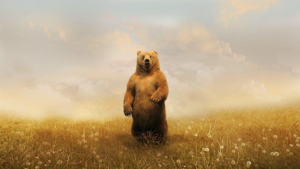 Bear Desktop Wallpapers