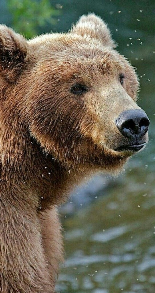 Bear Images 2020