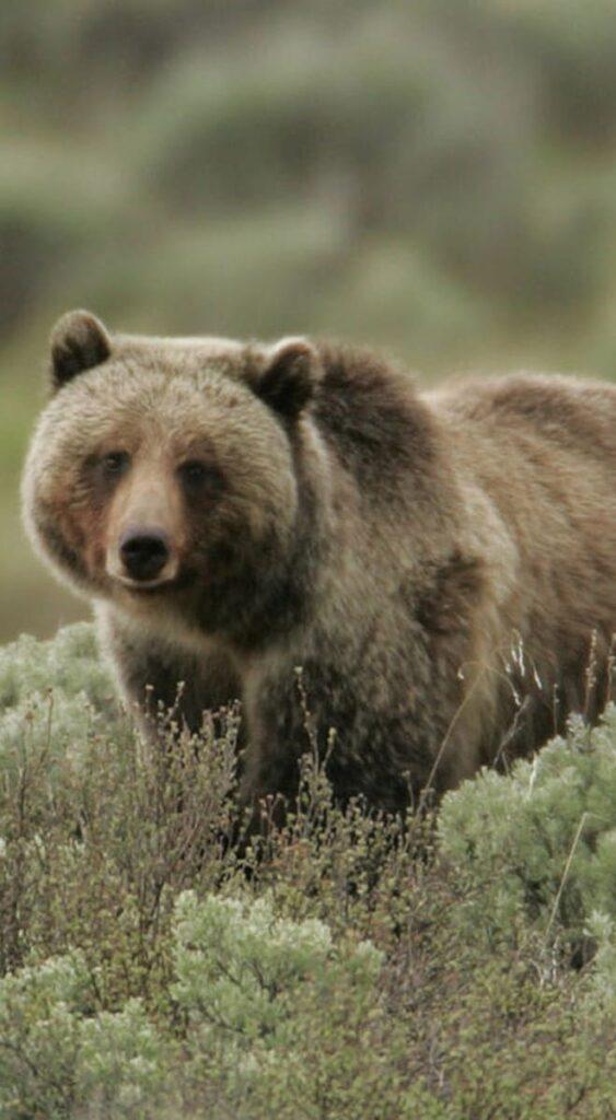 Bear Images Hd