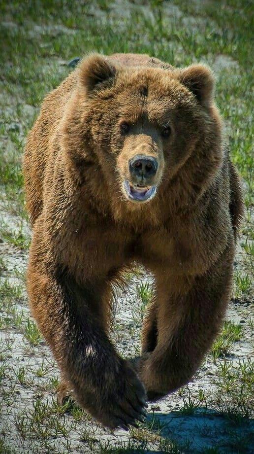 Bear Photos 2020