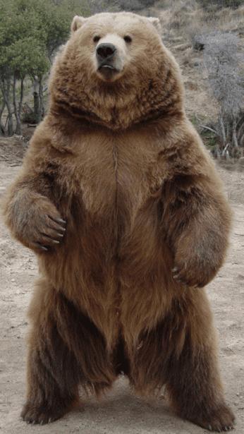 Bear Photos Hd