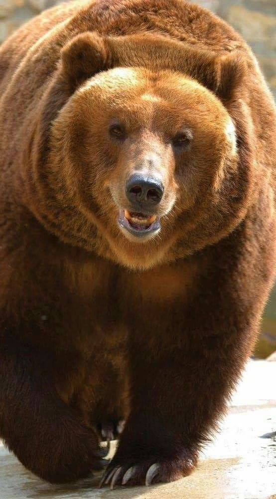 Bear Pictures Hd