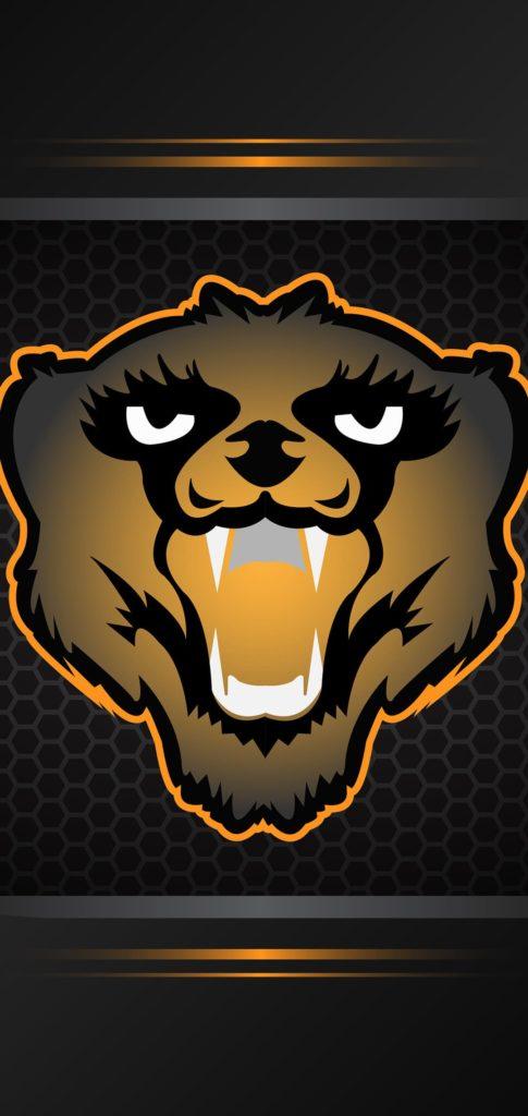 Bear Wallpaper 4k