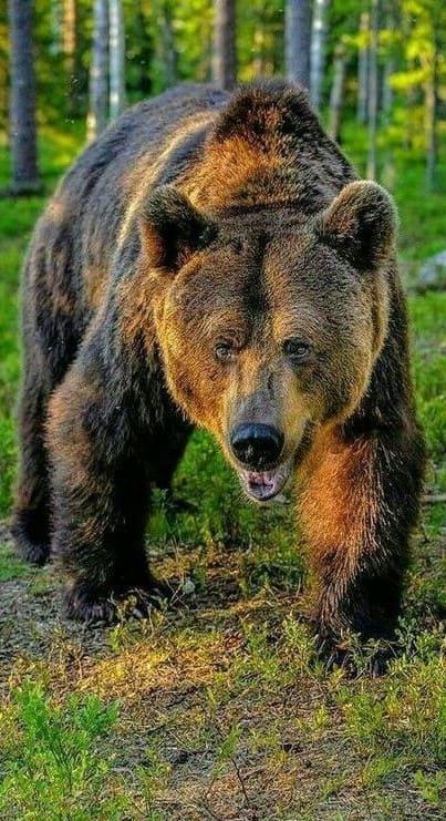 Bear Wallpaper For Mobile Hd
