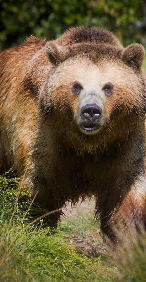 Bear Wallpaper For Phone Hd